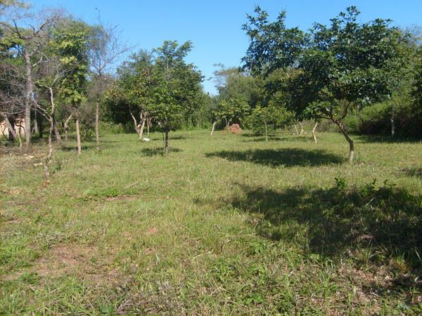 Kleines Grundstück vor Altos mit Baumbestand