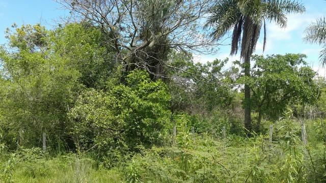 5 Hektare mit Flußlauf, in Yaguarón