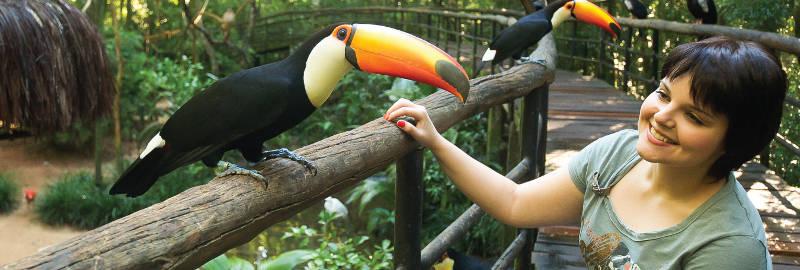 Vogelpark bei den Iguazú Wasserfällen