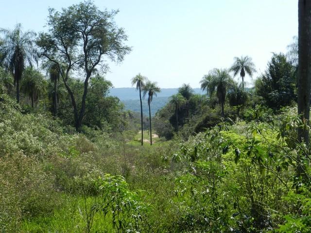 Grundstück mit 3,8 Hektare in Piribebuy