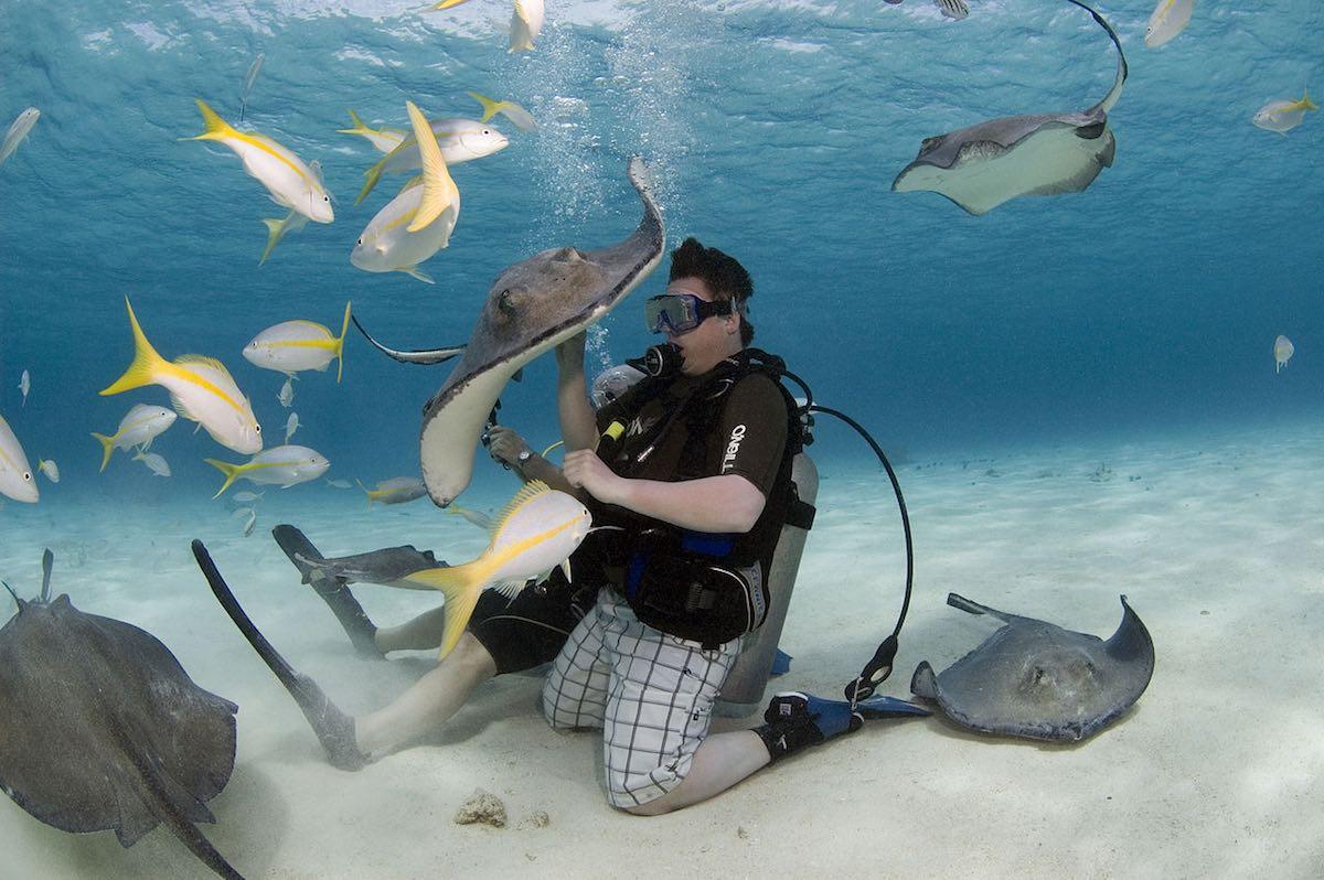 Rochen Schwimmen & Tauchen Karibik